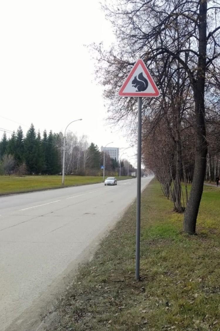 Знак «Осторожно, белки» простоял в Краснообске всего несколько месяцев. Фото: Предоставлено станцией юных натуралистов