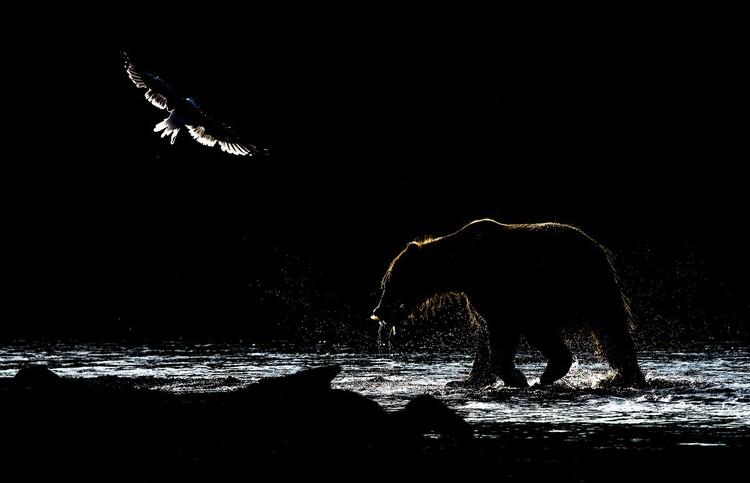 """В низком ключе"". Фото: Владимир Кушнарев"