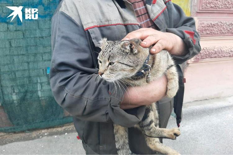 Кроме Вороны у Владимира живет кошка по имени Уша - тоже, можно сказать, найденыш.