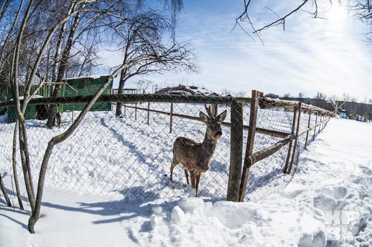 Животные уже настроились на весну, но не тут то было