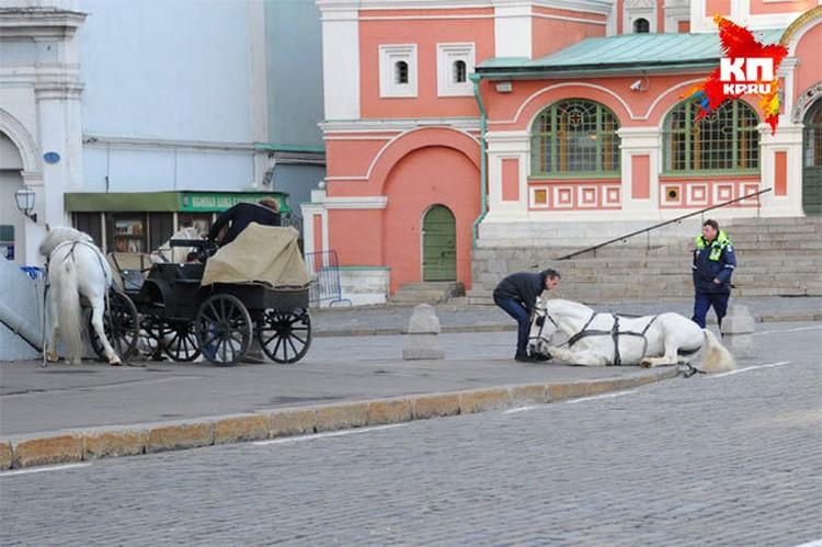 Упряжка на большой скорости врезалась в ступенки Исторического музея