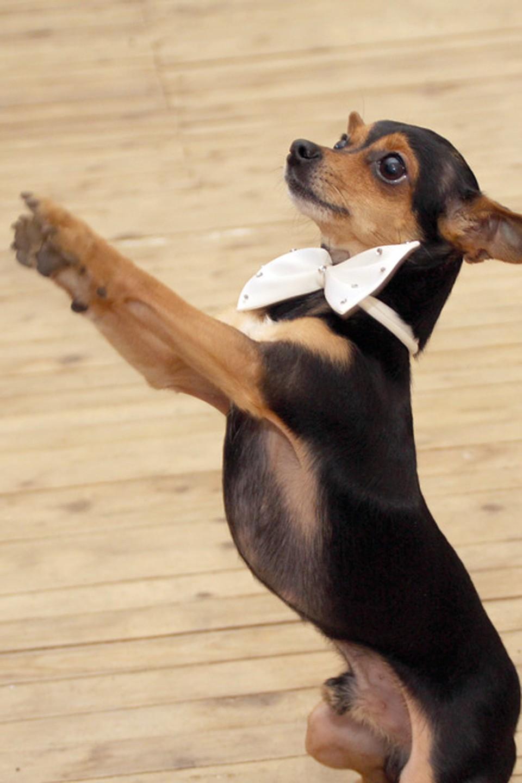 фото собак танцующих