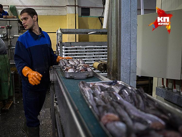 Вместо норвежской семги и форели мы теперь покупаем либо отечественную рыбу, либо ввезенную из стран, не поддержавших санкции против России.