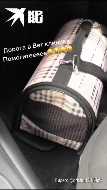 Кот заговорил на русском языке, когда понял, что хозяева везут его к ветеринару