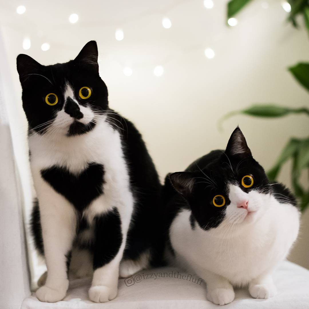 Is that for us? #heart #cutepetclub