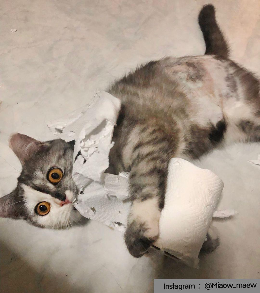 Туалетная бумага оказалась весьма вкусным прдуктом