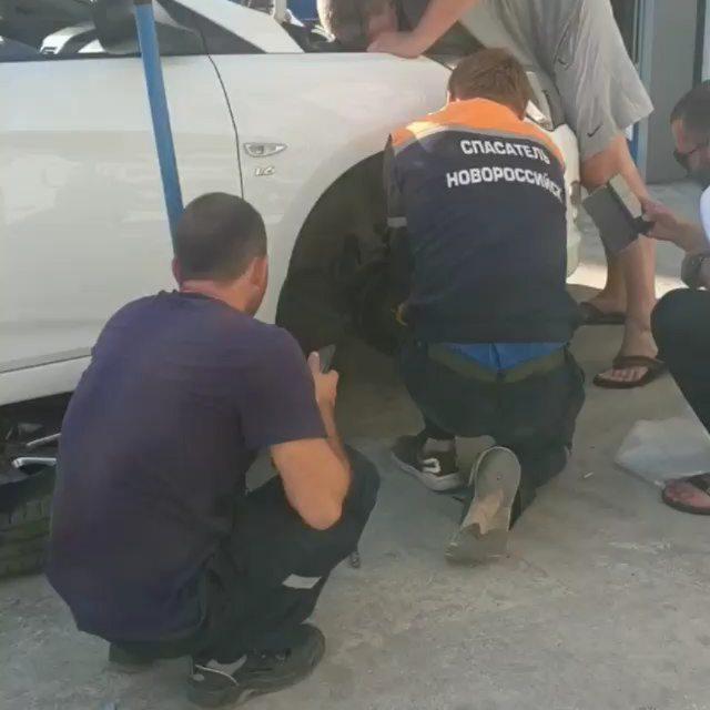 В Новороссийске разобрали машину, чтобы спасти кота